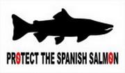 04 PROTEGE LOS SALMONES ESPAÑOLES